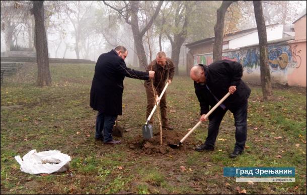 Zasađene breze u Plankovoj bašti u Zrenjaninu04.12.2019-1