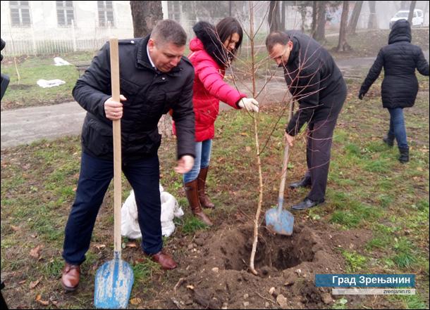 Zasađene breze u Plankovoj bašti u Zrenjaninu04.12.2019-2