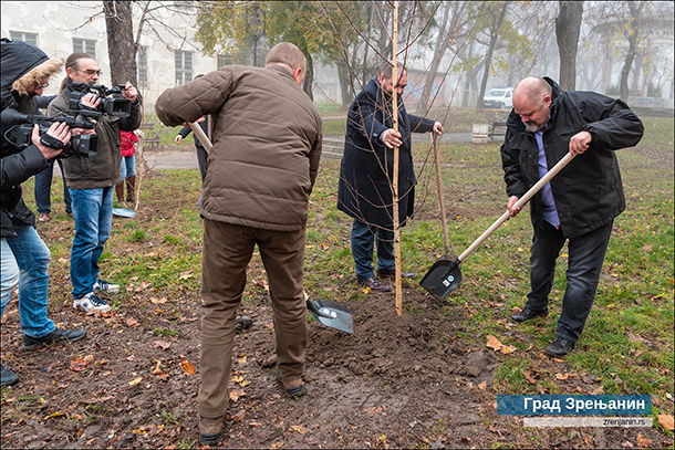 Zasađene breze u Plankovoj bašti u Zrenjaninu04.12.2019-5